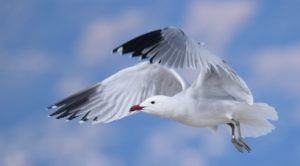 "Presentation ""Birds of the Mljet National Park"" on June 17 at the ""Stara skula"" Gallery"