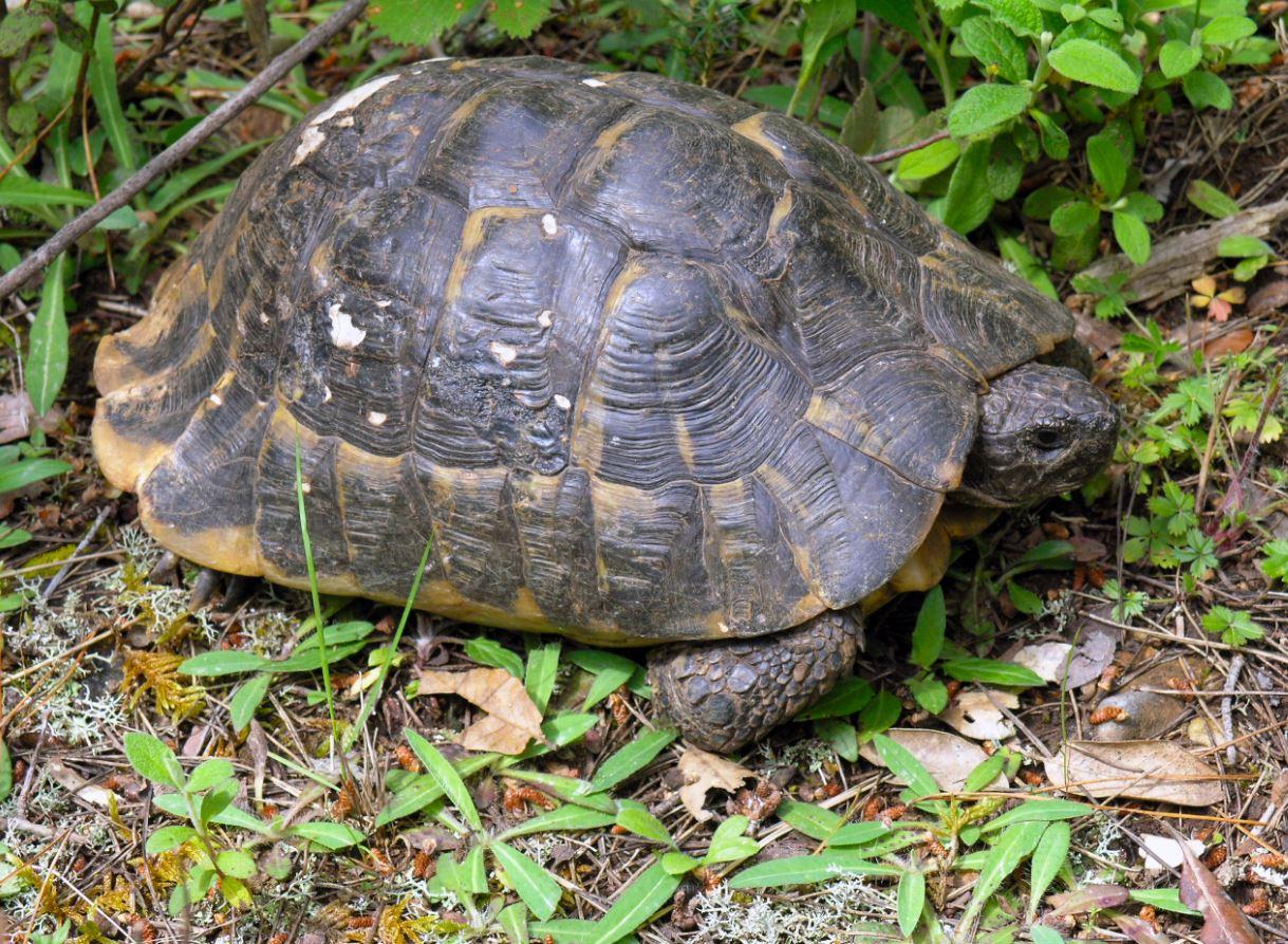 Read more about the article Međunarodni dan kornjača